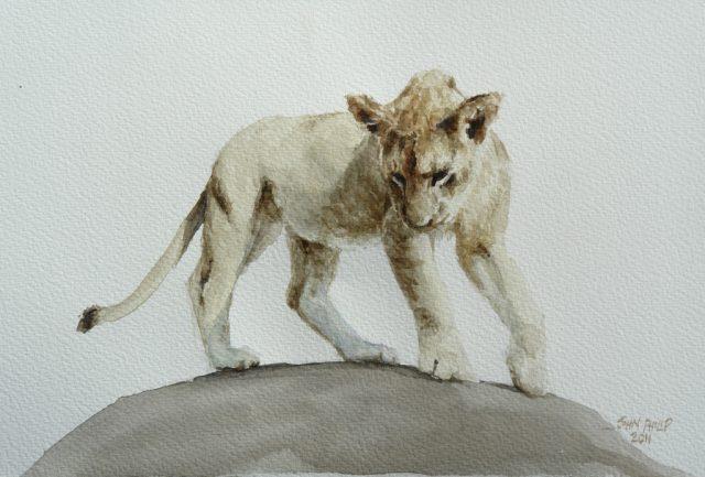 Watercolour of a lion cub.