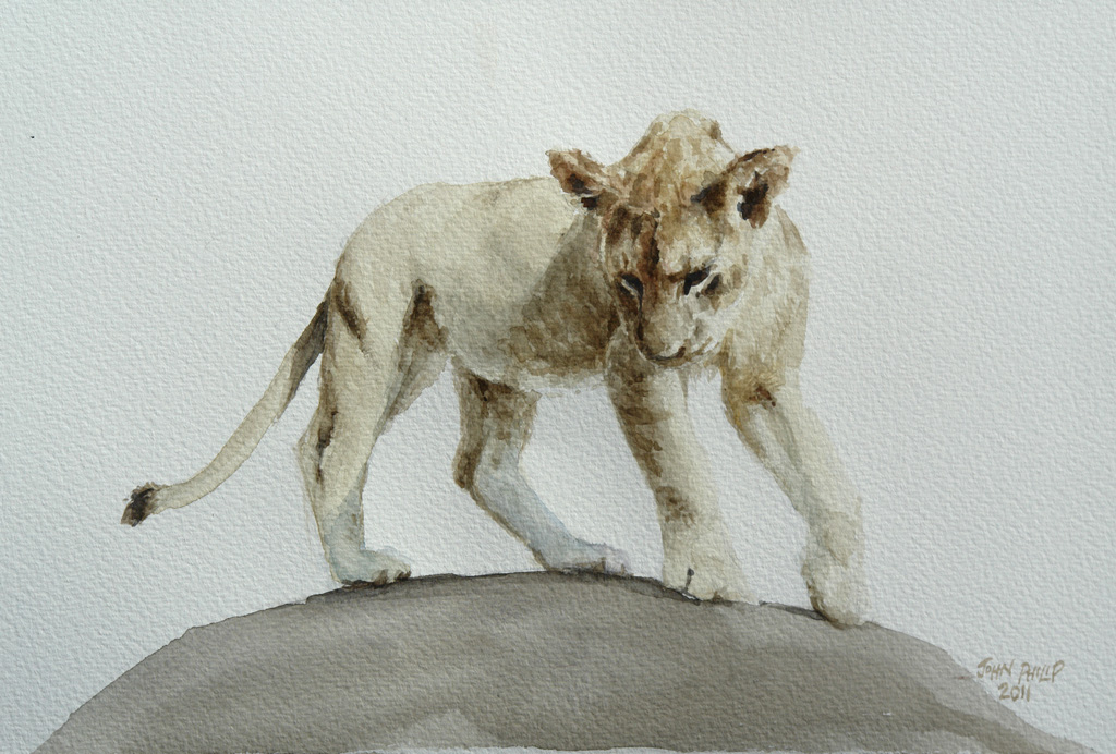 Watercolour of a lion cub.