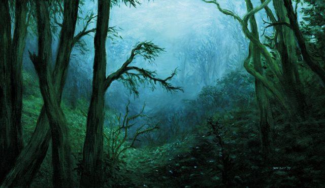 Lush green misty jungle scene