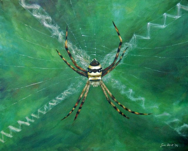 Oil Painting of an Argiope spider on its web