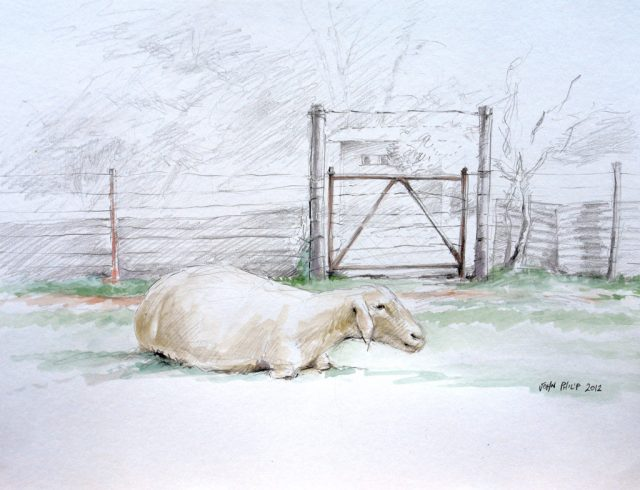 Sketch of a sheep lying down with a gate and building in the background.