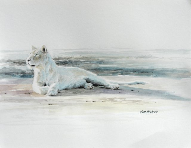 Watercolour of a white lioness