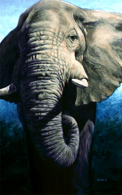 Looking up at an African Elephant with a blue background.