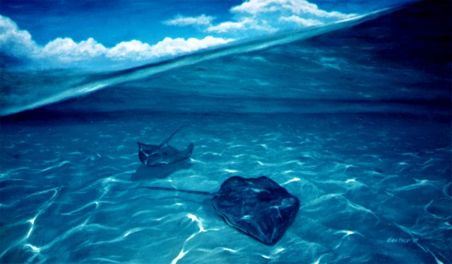 View of two lone stingrays, two worlds, air above, water below.