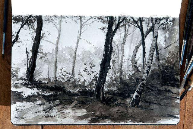 Pen and Ink Drawing of Forest scene in Brittany, France