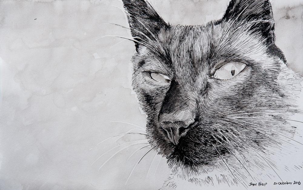 Nula - the Siamese cat