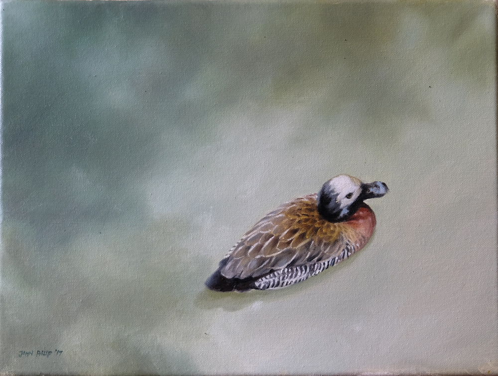 Oil Painting of Duck from above with shadows on water