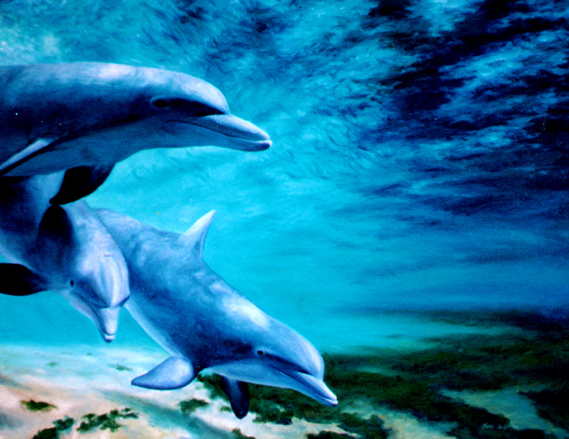 Some dolphins having fun.