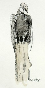 Pen and Watercolour of an Andes Condor