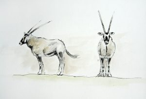 Pen and Watercolour of some Gemsbok