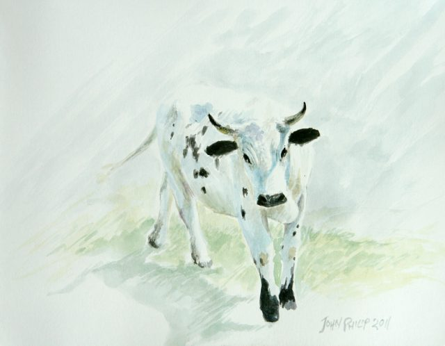 Watercolour painting of a Nguni Cow