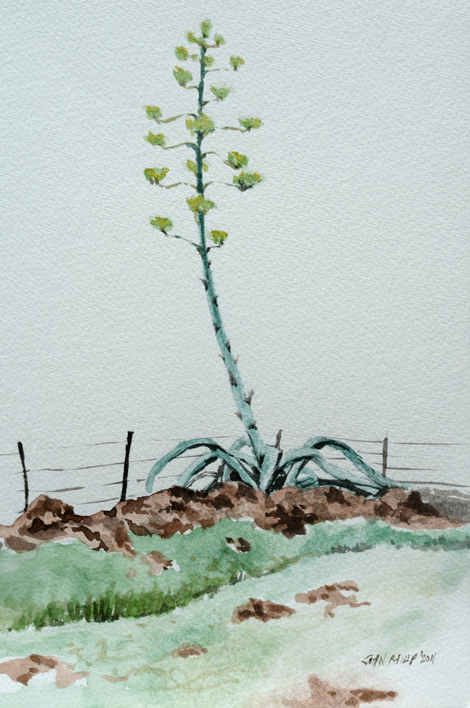 Watercolour Sketch of a Single Agave Flower