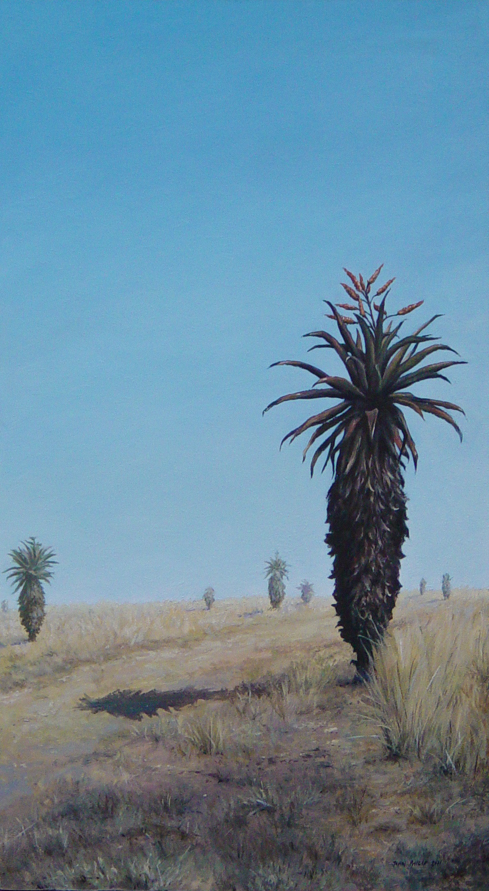 South African landscape of some aloes alongside a dusty road and a clear blue sky.