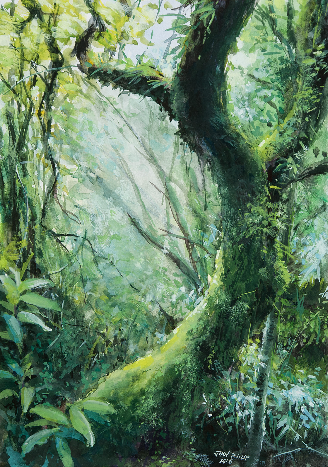 Guache painting of a Forest in the Buffelskloof Nature Reserve