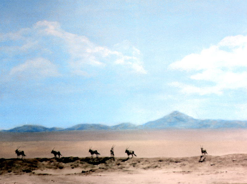 A group of Gemsbok in the sweltering heat of the Kalahari desert.