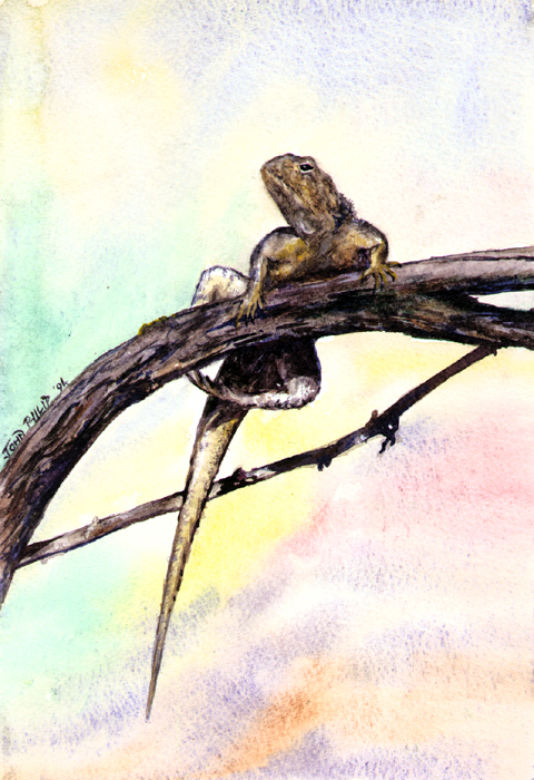 A lizard holding onto a branch.