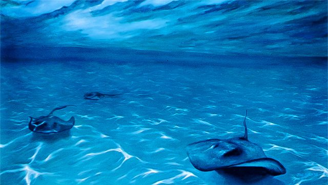 Three stingrays