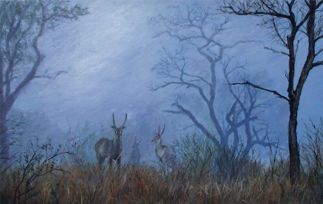Three waterbuck in a misty scene with thorn trees.