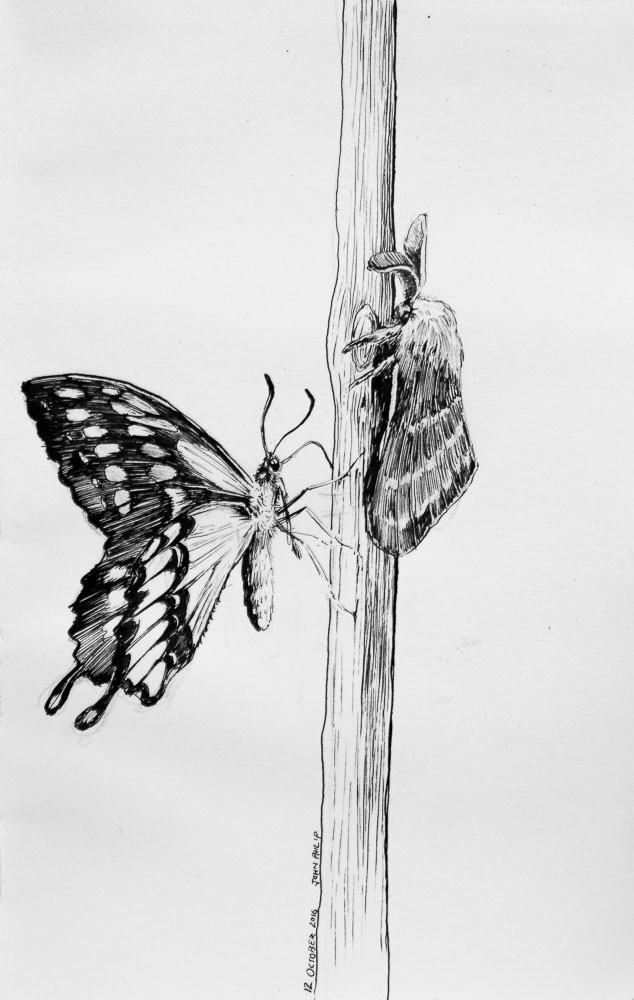 Moth vs Butterfly