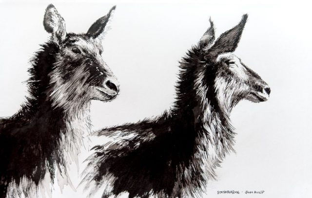 Waterbuck in Pen and Ink