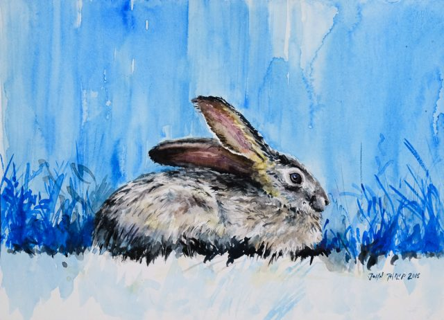Water colour painting of a cape hare in blue