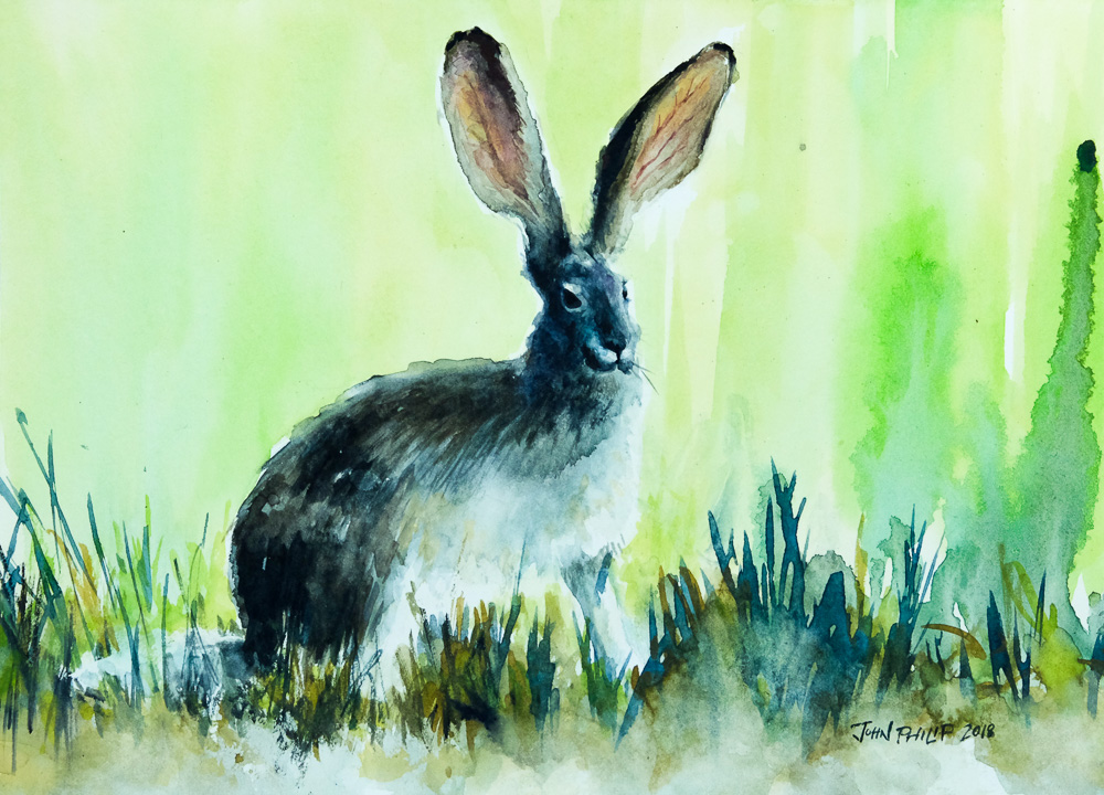 Water colour painting of a cape hare in green