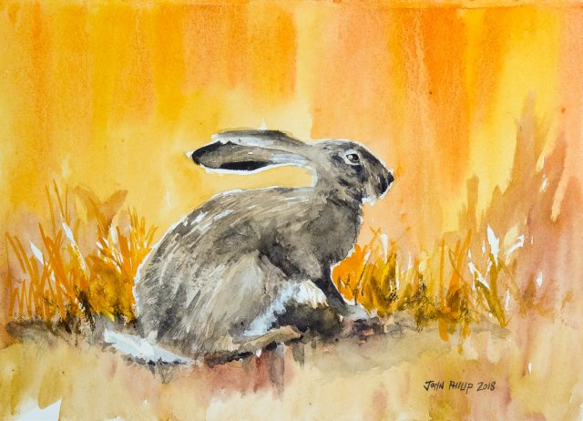 Water colour painting of a cape hare in orange