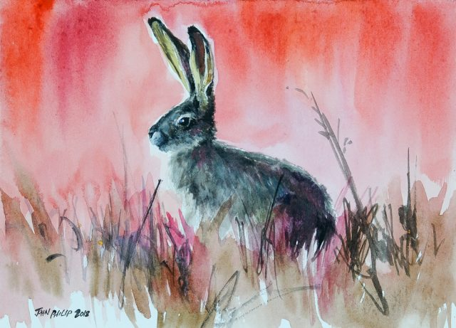 Water colour painting of a cape hare in red