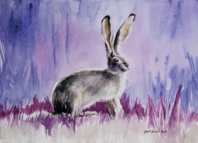 Water colour painting of a cape hare in violet