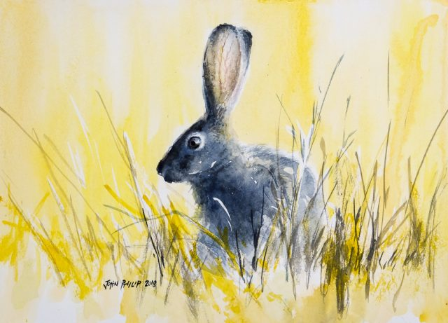 Water colour painting of a cape hare in yellow