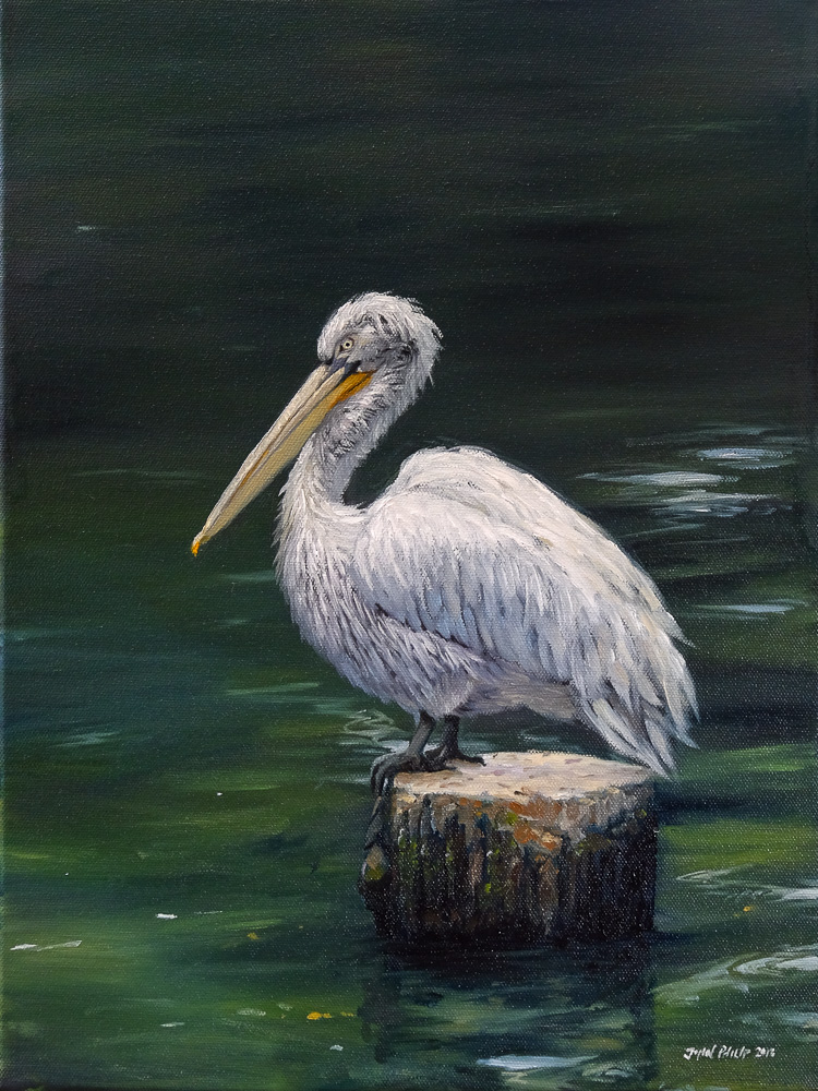 Oil painting of a Pelican