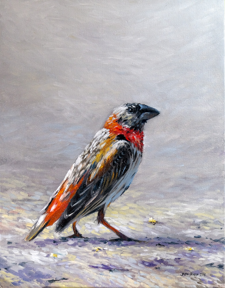 Oil painting of a young Southern Red Bishop