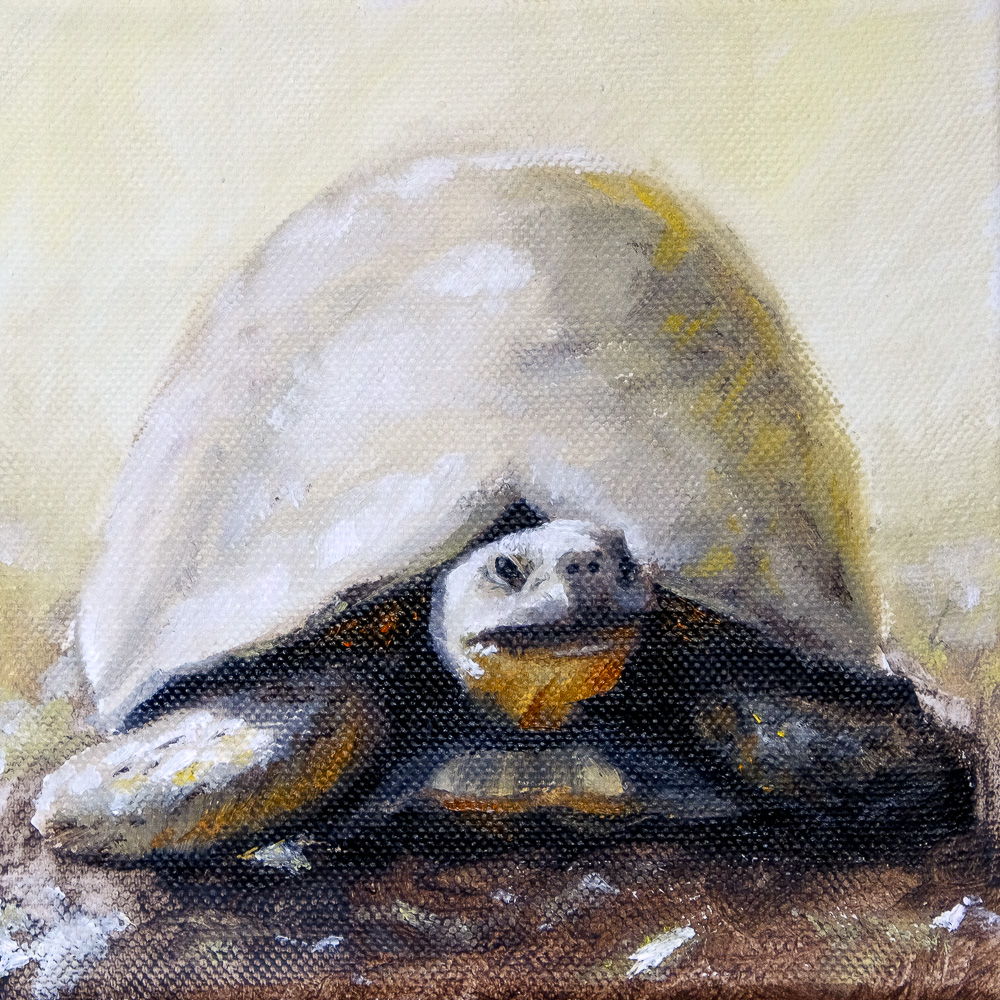 Oil Painting of a Yellow Tortoise