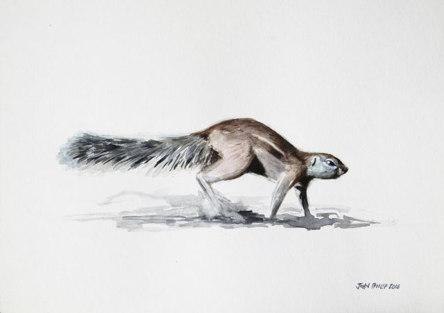 Painting of a Ground Squirrel