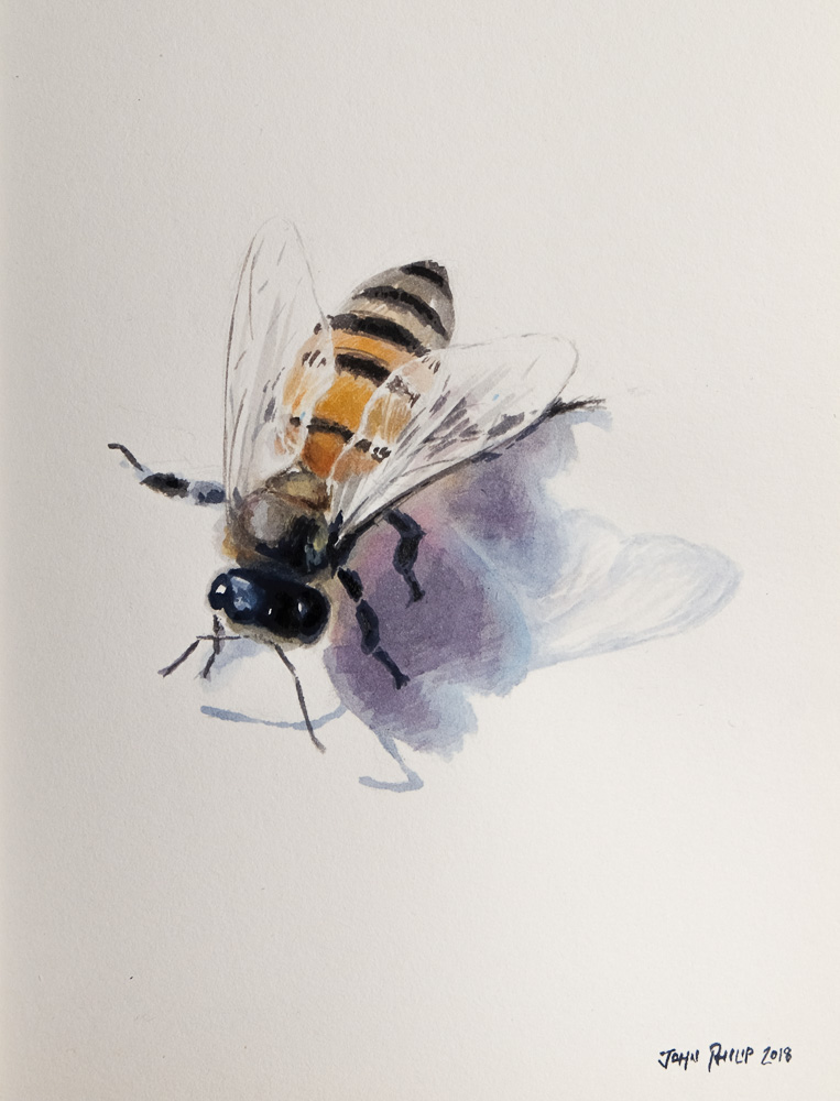 Little watercolour painting of a bee