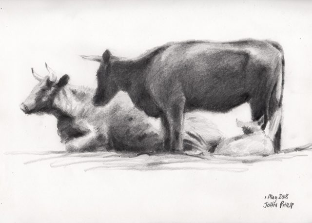 Drawing of some Cows