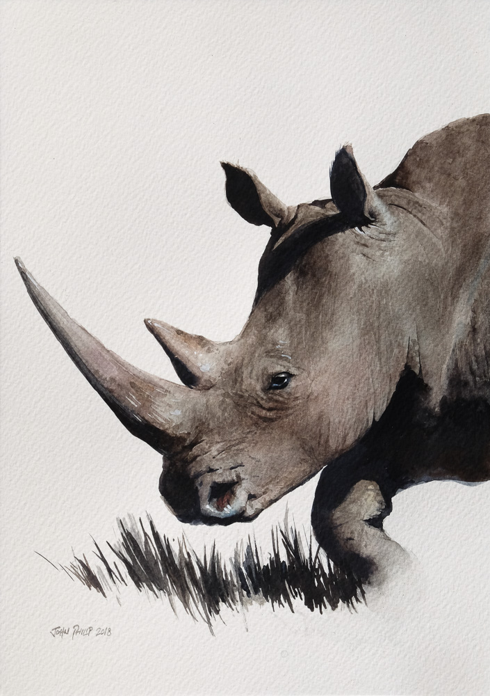Watercolor painting of a Rhino