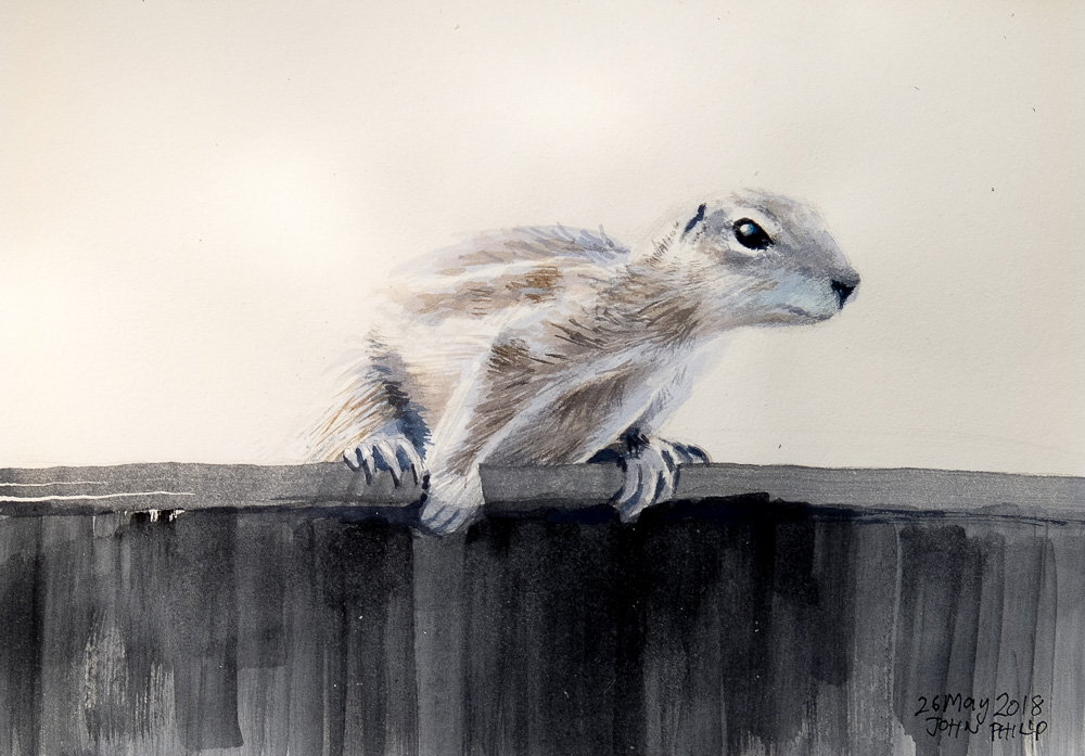 Watercolour painting of a Ground Squirrel