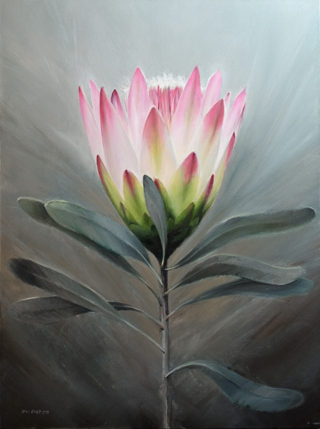 Flower painting of a Protea